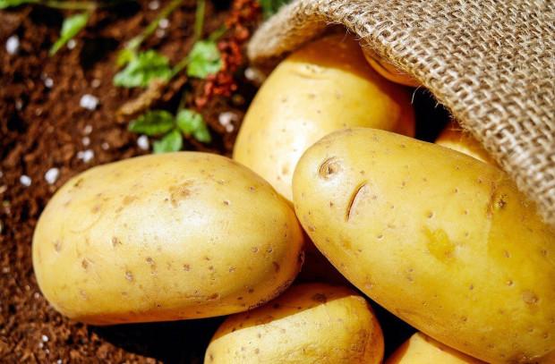 9 nowych odmian regionalnych ziemniaka