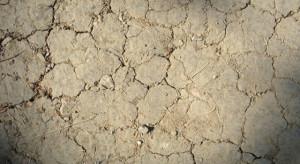 Wody Polskie: środki na walkę z suszą będą rosły rokrocznie