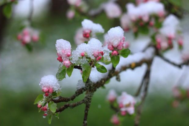 PZU: 16 marca ruszają dotowane ubezpieczenia dla rolników