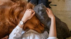 Koronawirus a postępowanie ze zwierzętami domowymi i gospodarskimi