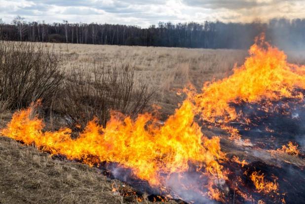 Rozpoczął się sezon na wypalanie traw. To niebezpieczne i karalne