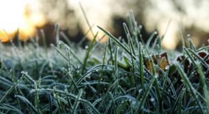 Synoptycy zapowiadają przymrozki i opady śniegu