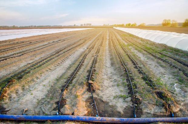 Wody Polskie: wegetacja roślin na przełomie marca i kwietnia powinna przebiegać normalnie
