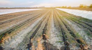 Wody Polskie: wegetacja roślin powinna przebiegać normalnie, ale wciąż zagraża nam susza