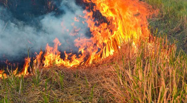 Rolnik odpowie przed sądem za wypalanie traw