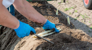 Niemcy: hodowca szparagów wyczarterował samoloty dla pracowników z Rumunii