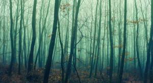 Straż Pożarna: w całej Polsce obowiązuje duże zagrożenie pożarowe w lasach