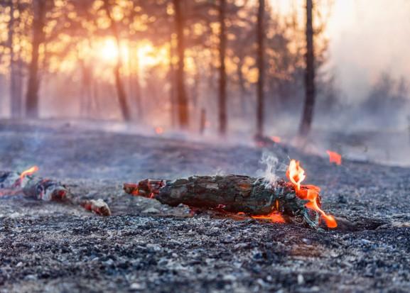 Instytut Badawczy Leśnictwa apeluje o ostrożność w zw. z zagrożeniem pożarowym w lasach