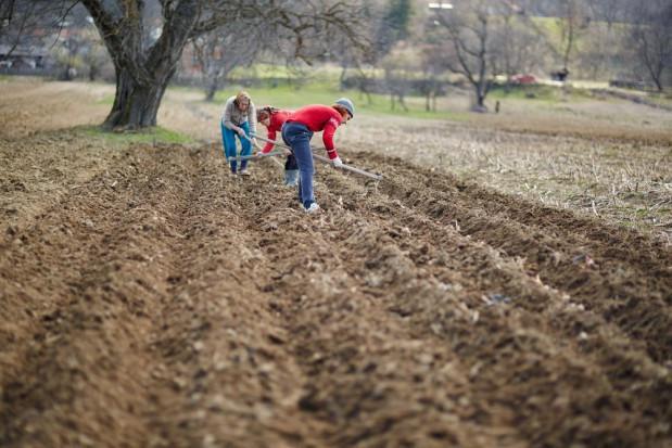 Koronawirus - co z zatrudnieniem w rolnictwie?