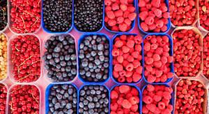 Agronom Berries: Jakość determinuje rozwój upraw owoców jagodowych