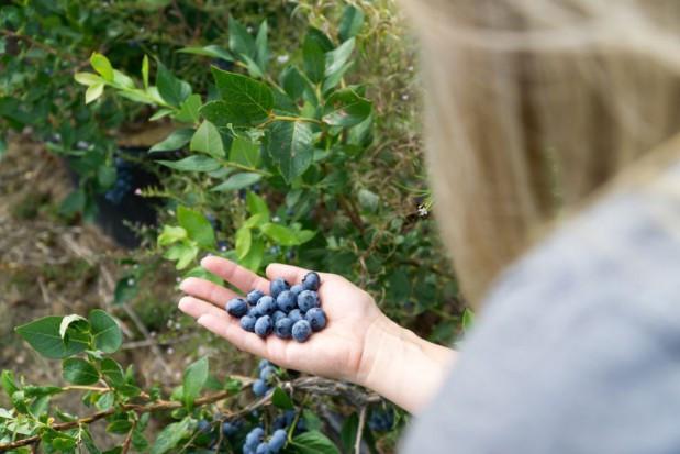 Brak pracowników uderzy w ogrodnictwo, zwłaszcza w krajach Europy Zach.
