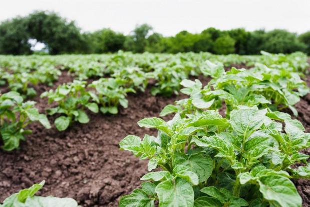 Rosja planuje zwiększyć produkcję roślinną w 2020 roku