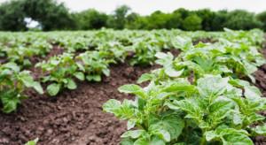 Rosja planuje zwiększyć produkcję roślinną w 2020 r.