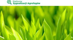 Platforma Sygnalizacji Agrofagów – wsparcie dla doradców i rolników