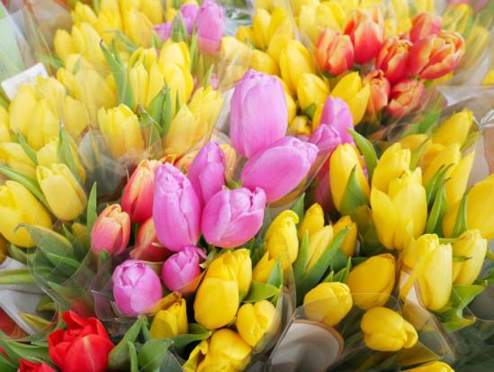 FBZPR: duże straty producentów kwiatów przez koronawirusa