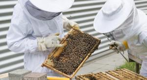 Kanada: pszczelarze wskazują na konsekwencje pandemii dla rolnictwa