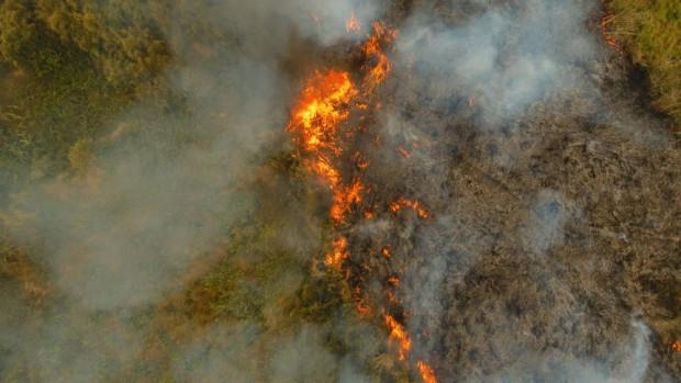 Świętokrzyskie: Spaleniu uległo niemal 30 hektarów cennych łąk i torfowisk