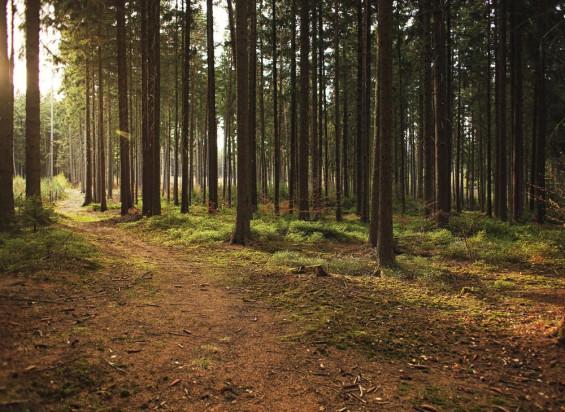 Lasy Państwowe: najwyższy stopień zagrożenia pożarowego w większości lasów w Polsce
