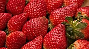 Włochy: Ożywienie na rynku truskawek i wzrost cen