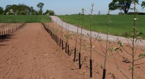 Lubelskie: Susza coraz bardziej dokucza sadownikom