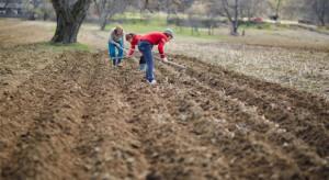 USA liberalizuje wymagania dotyczące pracowników sezonowych w rolnictwie