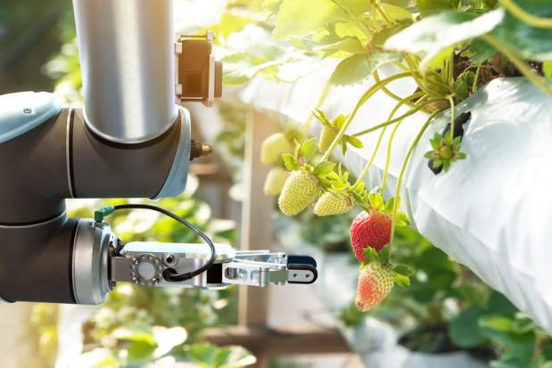 Roboty zrewolucjonizują uprawy ogrodnicze?