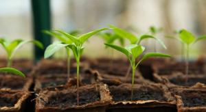 Naukowcy z Lublina: fotosyntezę napędza nie tylko światło, ale i ciepło
