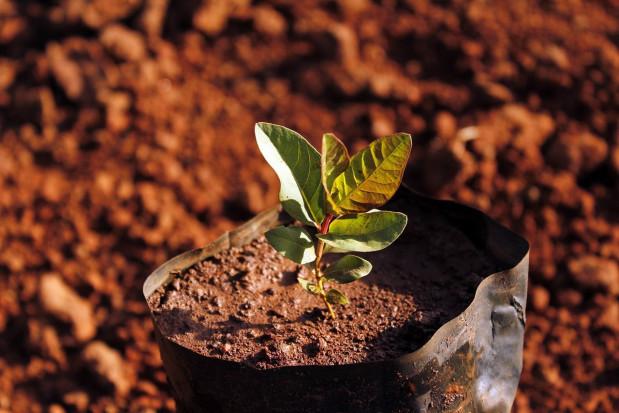 Podkarpackie: W lasach posadzono już ponad 12,5 mln młodych drzewek