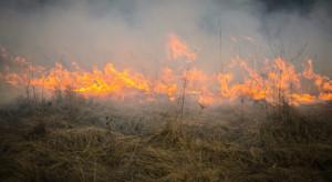 PSP: ostatniej doby ponad tysiąc pożarów; płonął Biebrzański Park Narodowy