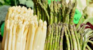 Szparagi dostępne na rynku hurtowym w Broniszach