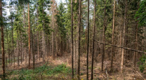 Niemcy: Brak opadów zagrożeniem dla rolnictwa i lasów
