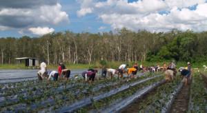 Hiszpania: Pomimo bezrobocia brakuje rąk do pracy przy zbiorach owoców i warzyw