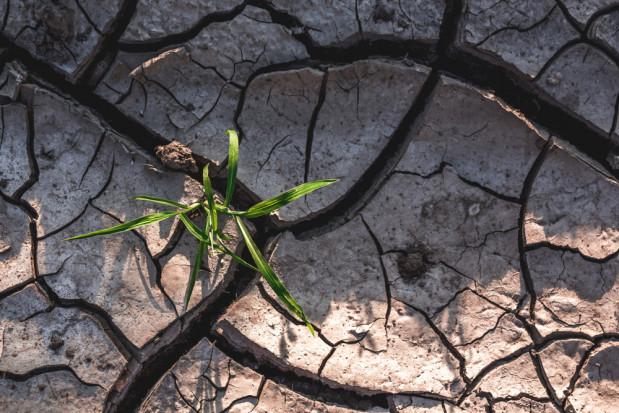 Synoptyk: aby zażegnać suszę, przez trzy miesiące musiałby padać regularny deszcz