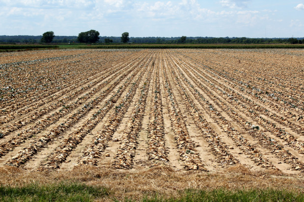 Duda: Jeśli wystąpi susza to rolnicy nie zostaną bez pomocy
