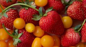Polacy uwielbiają truskawki i pomidory (badanie)