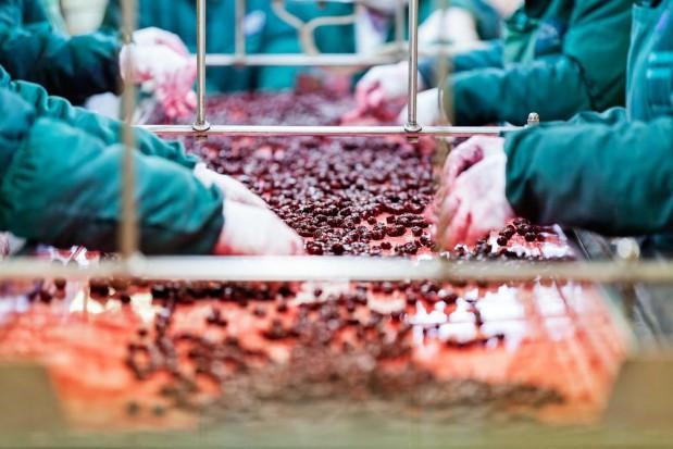 TEP: polskie rolnictwo odporne na koronawirusa, gorzej z przetwórstwem
