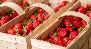 Ceny truskawek 2020 - ile zapłacimy za pierwsze owoce? (analiza)