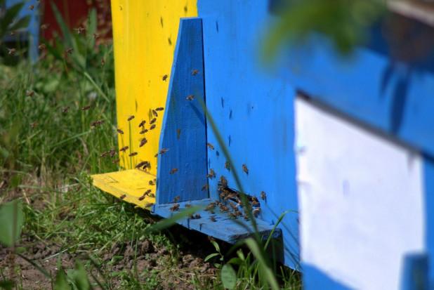 Kolejne zatrucia pszczół w pasiekach pod Skierniewicami