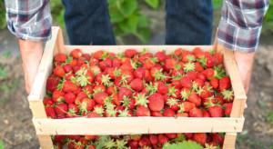 Praca w ogrodnictwie: Czartery nie rozwiążą problemu niedoboru siły roboczej w Polsce