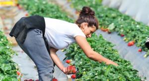 ZSRP chce interwencji premiera ws. zatrudniania pracowników sezonowych