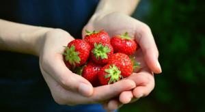 Zbiory owoców w tym roku powinny bardzo się opłacać