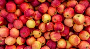 Jabłka są coraz bardziej pożądane i trudniej dostępne