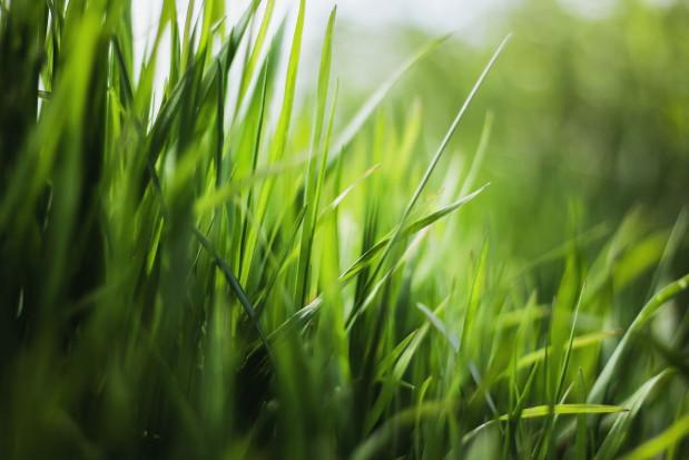 Śląskie: Metropolia apeluje, by nie kosić traw w czasie suszy