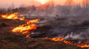 Komendant Straży Pożarnej: kary finansowe za wypalanie traw powinny być bardziej dotkliwe