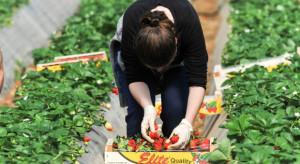 Francja potrzebuje polskich pracowników sezonowych