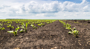 Krzem – zwiększa tolerancję roślin na czynniki stresowe
