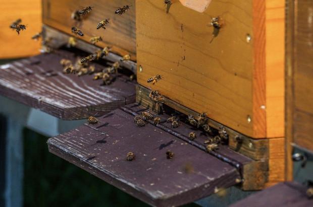 Dolnośląskie: Pszczelarze złapali złodzieja uli