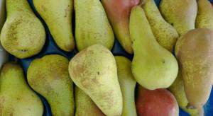 Rosja głównym rynkiem dla argentyńskich gruszek