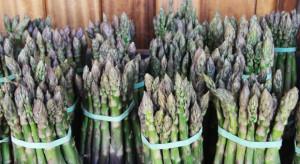 Green River: susza i przymrozki nie dotknęły upraw szparagów; wzrosły ceny