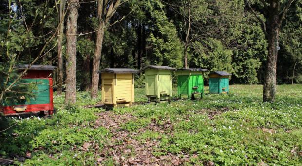 Pszczelarz-złodziej kradł ule innym pszczelarzom